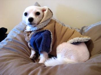 Brodie's New Coat