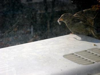 The bird that woke me up this morning